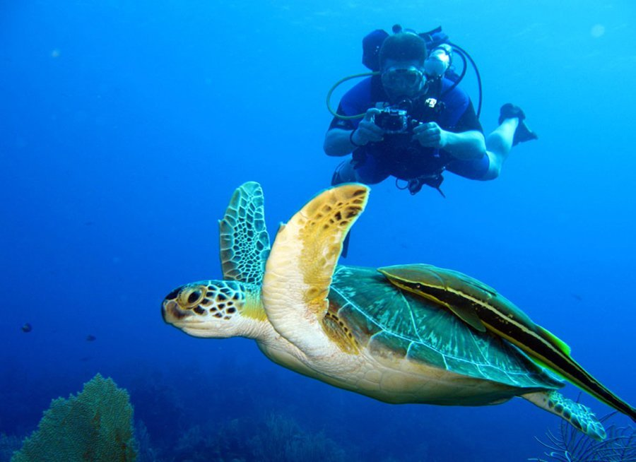 Scuba Diving - Things to do in Tamarindo Costa Rica