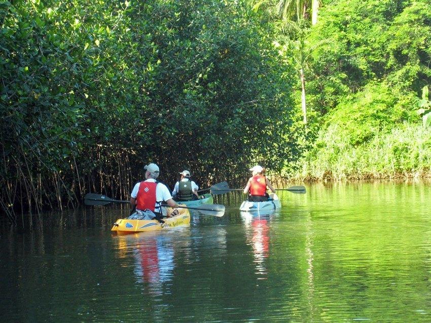 Kayak mangrove tour at sunset