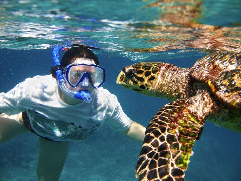 snorkeling Tamarindo