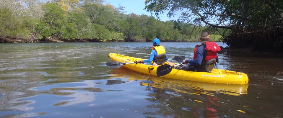 Tamarindo mangrove tour