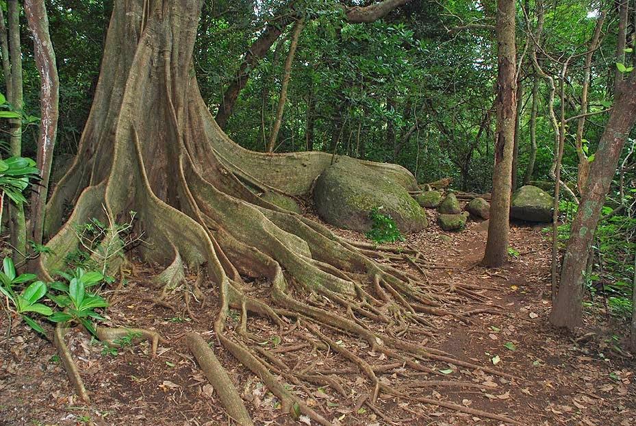 Rincon de la Vieja hiking trails